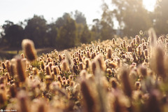 Rayos de luz. (Pablo_Rivera) Tags: flowers light sun sunlight flower nature floral sunrise canon 50mm spring natural huelva naturallight springtime 50mmf18 500d lapalmadelcondado natureperfection corumbel