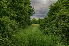 Wald&Wiese (shortscale) Tags: wald busch gebsch wolkewiese