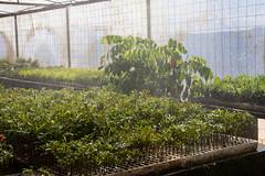 Viveiro-11 (Secom UnB) Tags: plantas jardim prc antonio jardins estufa prefeitura viveiro mudas antnio jardinagem campusdarcyribeiro