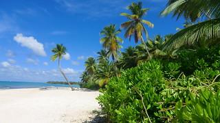 Dominican-Republic - Island of Saona - dream beach!