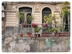 50-48-46 (archidream) Tags: teatro vincenzobellini musica bohemien artisti piazza plaza recitazione catania sicilia barocco fiori