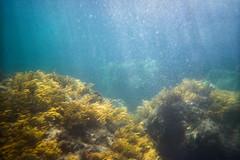 (Romn__PG) Tags: mar asturias algas underwater film