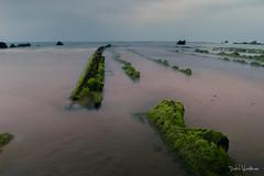 Cola de dragn (dabidnet) Tags: bizkaia playa mar naturaleza verde verano euskalherria barrika nubes paisaje