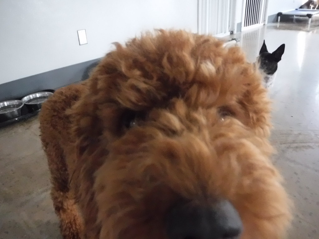 Canine To Five Dog Daycare And Dog Boarding Ferndale Mi