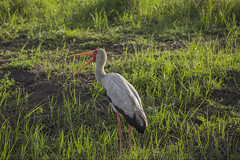 _MG_7754 (farhan1mirza) Tags: wild nature animal canon kenya wildlife 6d nnp nairobinationalpark