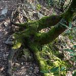 Punta Manara: nel bosco thumbnail