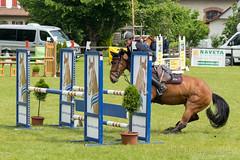 DSC07789_s (AndiP66) Tags: sony sonyalpha 77markii 77ii 77m2 a77ii alpha ilca77m2 slta77ii sony70400mm f456 sony70400mmf456gssmii sal70400g2 andreaspeters springen pfingstspringen samstag saturday 23mai2015 pfingsten langenthal 2015 mai may pferd horse schweiz switzerland kantonbern cantonofbern concours contest wettbewerb horsejumping springreiten pferdespringen equestrian sports pferdesport sport