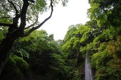(macco) Tags: japan waterfall  nippon  gifu yoro    youro