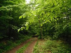 Divčibare 118 (jecadim) Tags: mountain nature forest trekking spring hiking serbia meadow srbija divčibare