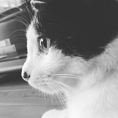 #cat #buchi #monochrome (yoshihisa_kobayashi2000) Tags: moon square squareformat iphoneography instagramapp uploaded:by=instagram