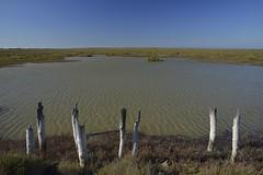 Les piquets (Michel Seguret Thanks all for 8.800 000 views) Tags: france nature pond nikon paca d800 camargue etang bouchesdurhone salins michelseguret