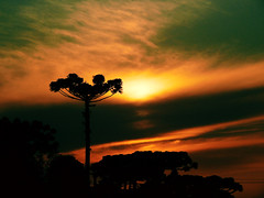 O Astro Rei - O Sol (Elton Abro) Tags: santa sol paran brasil de centro felicidade curitiba por anoitecer silhueta mercs