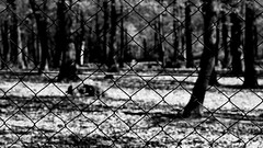 Wire fences (Beaust) Tags: park wood shadow blackandwhite white black tree abandoned nature monochrome horizontal contrast forest fence dark trapped wire iron closed pattern close outdoor lock steel dramatic prison drama locked trap imprisoned
