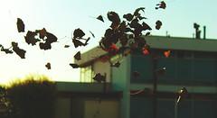 IMG_7192 (dafloct) Tags: chile camera old winter portrait paisajes naturaleza nature water leaves rock canon vintage river hojas is photo airport agua day autum wind retrato free concepcion pic viento falls be otoo t5 1855mm coming dust montaa biobio aeropuerto aire camara libre cascada tiempo fallas maule cayendo