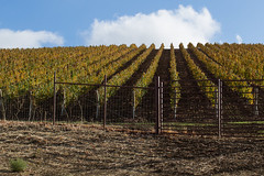 Daou Winery (Pamela Greer) Tags: california wine lifestyle places pasorobles wines 2014 daouwinery