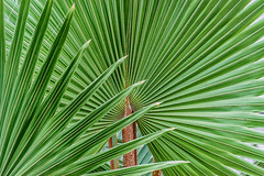 Verdant (robinta) Tags: plant abstract green texture geometric nature public museum garden pattern pentax palm exotic repetition ks1 sunderland tamron18250mm