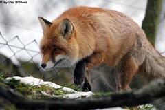 IMG_8582 (u.wittwer) Tags: park zoo schweiz switzerland tiere suisse tierpark heimat arth naturpark goldau widi