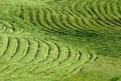 il mare verde (aNNa schramm) Tags: green landscape outdoor sommer feld wiese grn landschaft muster kurve linien kurven textur sommertag organischesmuster