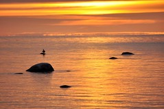 Golden Sunset (FlorDeOro) Tags: sunset summer sky seascape bird water stone clouds photography evening nikon scenery colorful glow sweden gotland d90 mijarajc