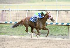 "2015-01-02 (104) r6 Sheldon Russell on #3 Lasamanamama (JLeeFleenor) Tags: photos photography md marylandracing marylandhorseracing laurelpark jockey جُوكِي ""赛马骑师"" jinete ""競馬騎手"" dżokej jocheu คนขี่ม้าแข่ง jóquei žokej kilparatsastaja rennreiter fantino ""경마 기수"" жокей jokey người horses thoroughbreds equine equestrian cheval cavalo cavallo cavall caballo pferd paard perd hevonen hest hestur cal kon konj beygir capall ceffyl cuddy yarraman faras alogo soos kuda uma pfeerd koin حصان кон 马 häst άλογο סוס घोड़ा 馬 koń лошадь sheldon sheldonrussell chestnut maryland"