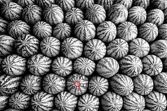 Water Melon_Barisal_Nayan Kumar_20150413_0128 (Nayan Kumar) Tags: youth river workers asia working watermelon busy bangladesh pohelaboishakh barisal