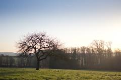 L'arbre (Zaskars) Tags: morning sky nature forest 35mm spring pentax alsace paysage lorraine campagne avril printemps 67 forêt 57 elsass k5 matin moselle vallée cielbleu basrhin 2015 sarre wittring tempsclair siltzheim smcpdal35mmf24al 35mmf24al valléedelasarre