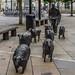 SHEEP ON THE ROAD [ Deborah Brown] REF-104826