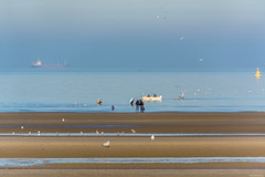 Autumnal morning mood (dominiquesainthilaire) Tags: blue sea people mer seagulls seascape beach birds landscape boat sand nikon fishermen belgium belgique outdoor sable bleu paysage plage channel manche oiseaux merdunord pcheurs mouettes lapanne nikond7100