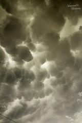 050716 - Wray Colorado Mammatus (NebraskaSC Photography) Tags: sky storm nature weather clouds landscape photography colorado day photographic chase tormenta cloudscape stormcloud orage darkclouds darksky severeweather daysky stormchasing wx stormchasers mammatus darkskies chasers stormscape supercell stormyday skywarn stormchase cloudwatching cowx magicsky awesomenature weatherphotography weatherphotos skytheme weatherphoto stormpics cloudsday weatherspotter skychasers dalekaminski nebraskasc cloudsofstorms