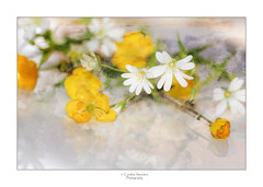 Crumpled paper (saundersc29) Tags: white reflection yellow spring wildflowers sigma105mm naturethroughthelens nikond750