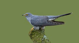 Cuckoo ~ Explored