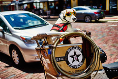Service Dog (FunkadelicSam) Tags: street city urban dog pet hot cute bird beagle dogs beautiful animals puppy store rainbow puppies funny colorful day dancing florida motorcycle service macaw humid