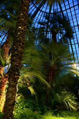 Royal greenhouse (larry_antwerp) Tags: brussels belgium belgi brussel  laken royalgarden         koninklijkeserre