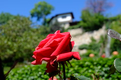 Perfect morning (Radu Andrei B) Tags: gardens maria queen bulgaria balchik