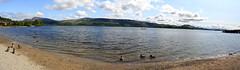 Ducks at Loch Lomond (misseka) Tags: uk lake scotland ducks loch lochlomond luss