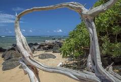 Window to my world :) (Freshairphotography) Tags: ocean beach window beautiful hawaii sand view peaceful driftwood kauai hawaiian tropical