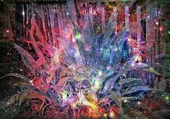Supernova Agave Metaphor (JangoFeldman) Tags: plant photomanipulation photoshop effects surreal agave psychedelic layered picmonkey