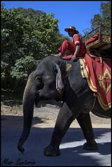 Elefante (Mar Santorio) Tags: elephant d50 nikon cambodia siemreap camboya eefante