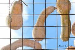 Las Calabazas de Ins (Marcelo A. Caraballo) Tags: nikon d5200 parana entrerios argentina calabazas cielo airelibre