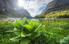 Power Flower (@hipydeus) Tags: flowers lake mountains green landscape austria spring berge dachstein bergsee landschaft gelberenzian