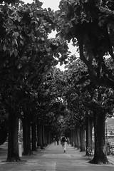 Lugano, Switzerland. (Glaucia SB) Tags: park sky bw cloud lake cold love nature beautiful wonderful photography switzerland amazing cool nikon perfect europe photographer swiss picture svizzera lugano inlove 2016 d7100