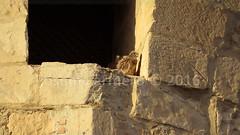 IMG_9779 marca (Josema Armero) Tags: lucena cerncalo castillodelmoral