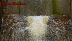 Dreilgerbachtalsperre (hubert_hamacher) Tags: eifel baum fichte tannenbaum pilz tanne dreilgerbachtalsperre