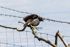 Steady (steven waddingham) Tags: bird rutland