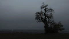 Mystical Place (Erich Hochstöger) Tags: old bw tree nature dark landscape lumix austria österreich alt natur panasonic mysterious sw mystical landschaft baum niederösterreich hdr dunkel mystisch finster loweraustria mostviertel geheimnisvoll knorrig fz150