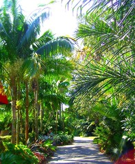 ~Oct 2009 Fairchild Gardens #5~ (endemanf) Tags: miamiflorida fairchildbotanicalgardens tropicallandscapes tropicaljunglegardens