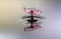 IMG_7565 (NAWAF AL HAMIDI) Tags: macro canon wow photo nice colours pic splash mypic               ahdphoto anstaqram