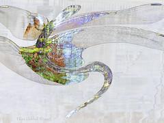 HSS!! Dragonfly mosaic (Elisafox22) Tags: distortion water photomanipulation photoshop reflections dragon distorted dragonfly mosaic patterns textures ripples photomanipulated sinuous postprocessing ipad awardtree sliderssunday elisafox22 elisaliddell©2015