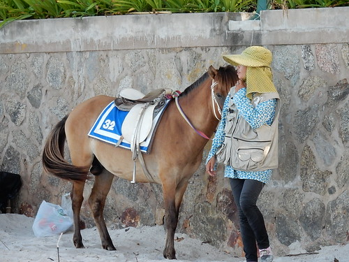 Horse #32 and Handler