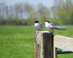 Fotowedstrijd - Photocontest ( Annieta ) Tags: netherlands spring sony nederland april lente allrightsreserved 2016 krimpenerwaard annieta a6000 usingthispicturewithoutpermissionisillegal